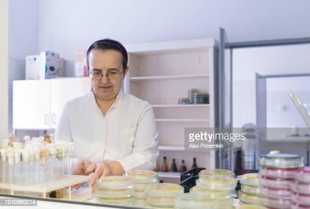 senior mujer de 55 años de edad, técnico de laboratorio, que recoge los platos de petri con cultivos bacterianos en el laboratorio de microbiología de la universidad - 50-59 years and women only fotografías e imágenes de stock