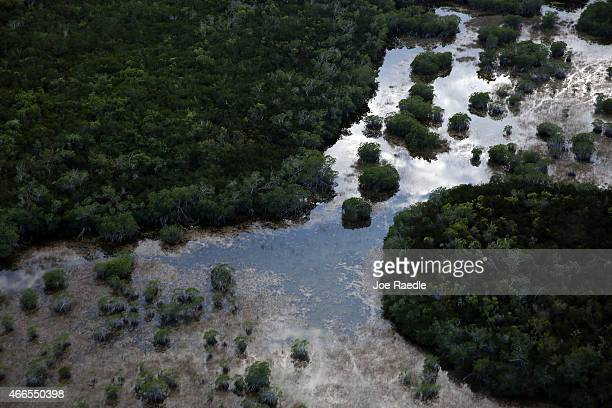 The sensitive ecological landscape of the Everglades National Park, home to many endangered and rare plants, is seen from the air on March 16, 2015...