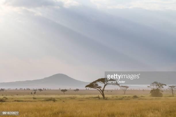 the serengeti - pianura foto e immagini stock