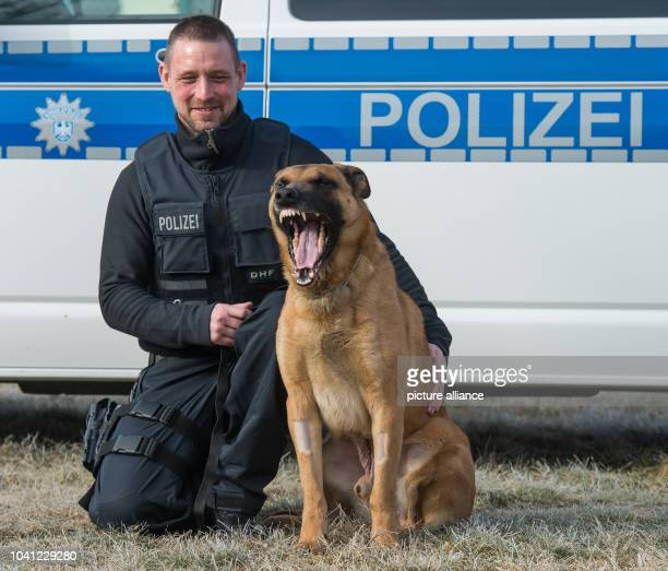 The service dog officer of the German federal police, Marco Friedrich, and his police dog Ivo of the race Belgian Shepherd can be seen in Frankfurt...