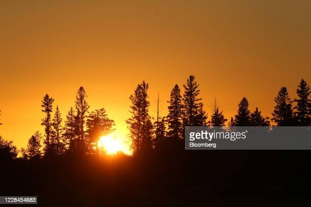 The setting sun is seen through evergreen trees over a farm near Hodgson Manitoba Canada on Thursday Sept 10 2020 A recentcrop tourpegged Canada's...