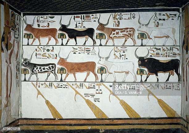 The seven celestial cows the husband bull and the four steering oars chapter 148 of the Book of the Dead detail from the frescoes in the second...