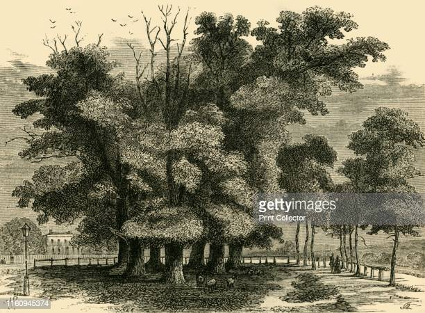 The Seven Sisters in 1830' Seven elms were planted in a circle with a walnut tree at their centre on common land known as Page Green which became...