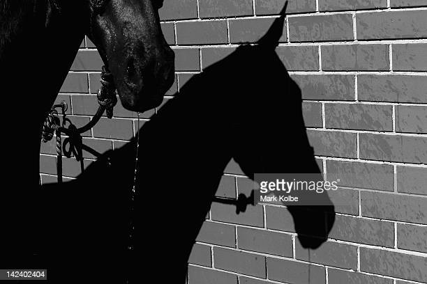 The shadow of a horse is seen as it is washed down during preparations for 2012 Sydney Royal Easter Show at the Sydney Showground on April 4 2012 in...