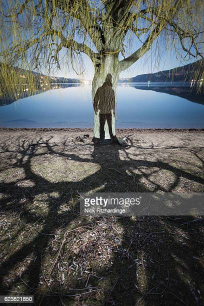 The shadow of a person on a Black Cottonwood tree trunk, Lake Country, British Columbia, Canada