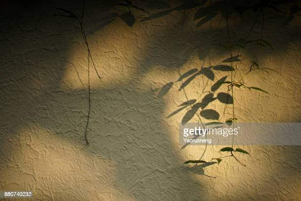 the shadow of the leaves on the wall