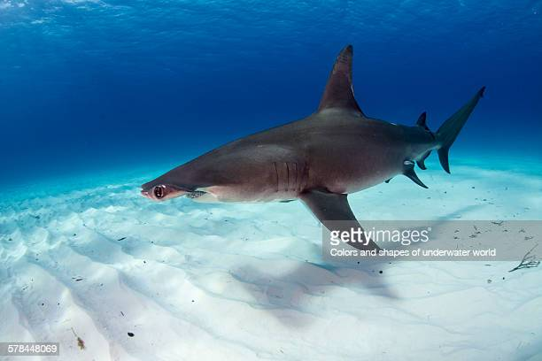 the shadow - south bimini stock photos and pictures