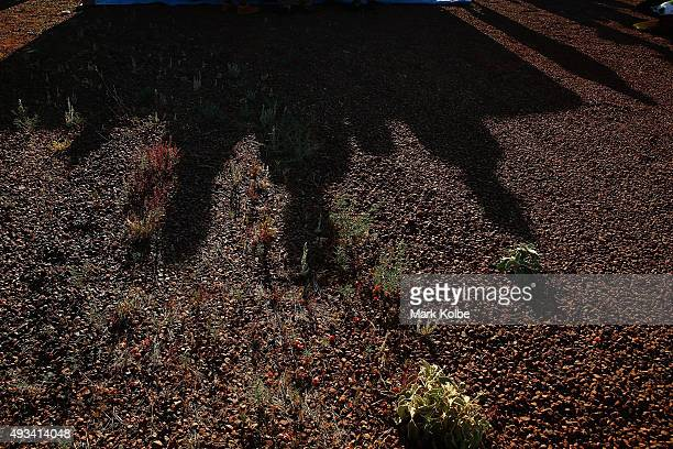 The shadows of team members from Tokai Challenger of Tokai University Japan are seen as they catch the last of the sun to charge at the end of racing...