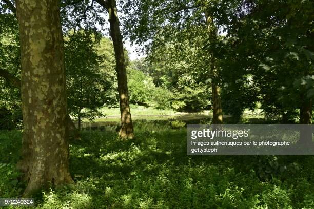 the shadowy gras area in woodland - gras stock pictures, royalty-free photos & images