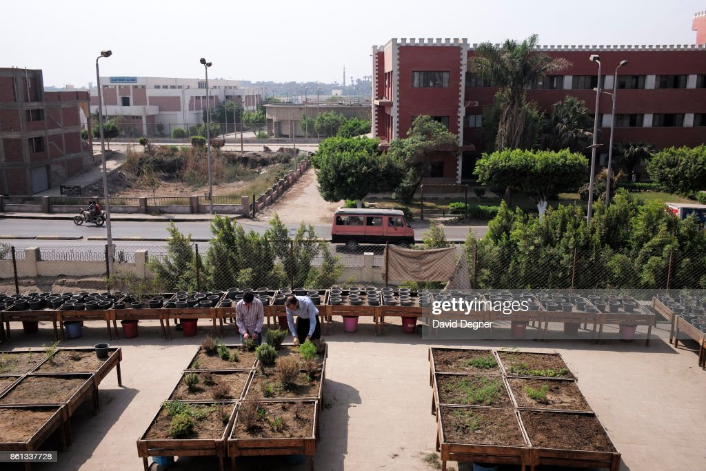 Urban Gardening In Egypt