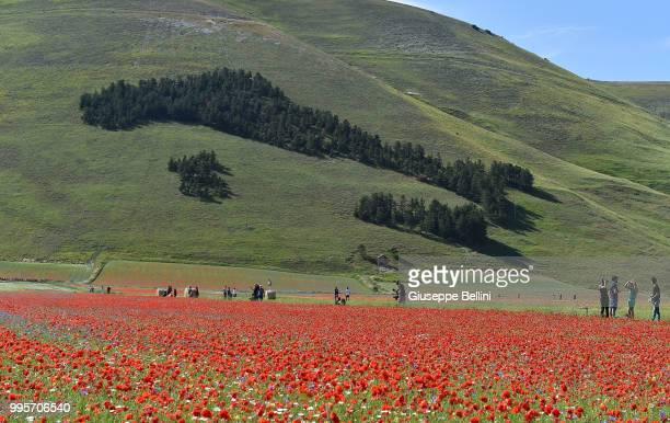 The shape of Italy is made with trees on the hill during Annual Blossom in Castelluccio on July 10, 2018 in Castelluccio di Norcia near Perugia,...