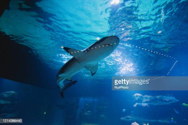 The shark swims freely on the reopening day of Aquazoo in Dusseldorf Germany on May 19 2020 amid Coronavirus crisis