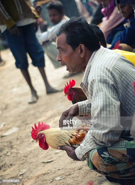 CONTENT] The sharp spurs on the leg of the rooster is seen during a cockfighting ritual on January 14 2014 in Kotalpur Village Bankura Westbengal...