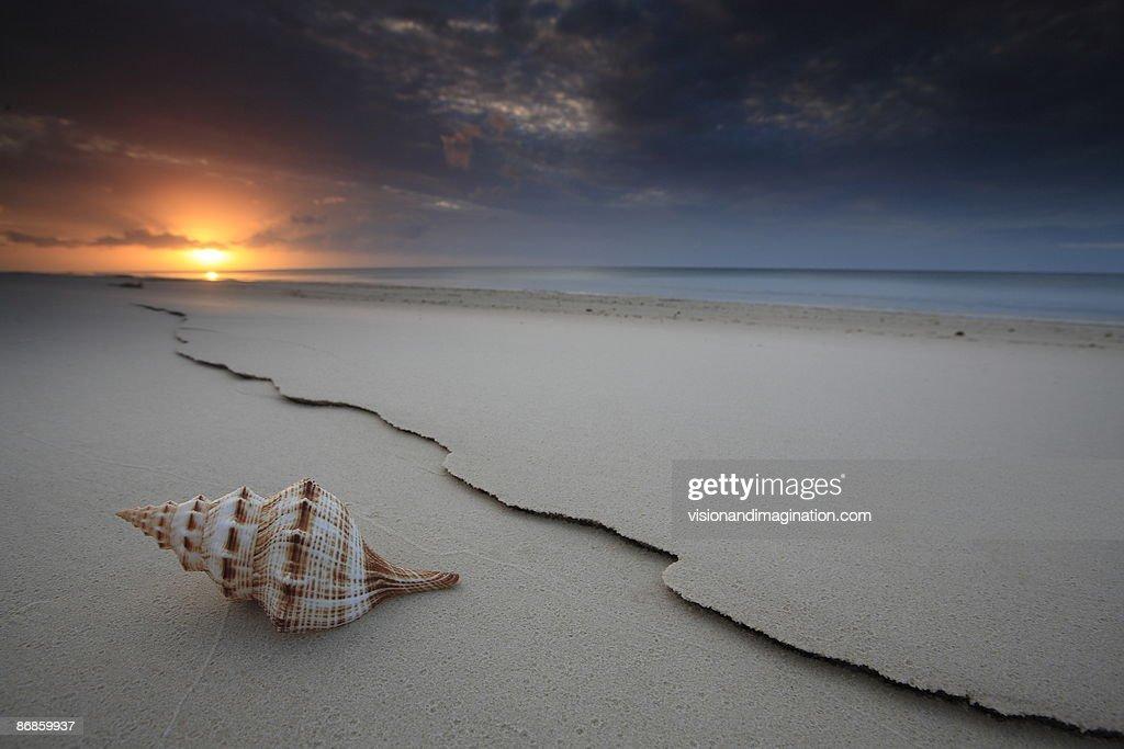 The Shell : Stock Photo