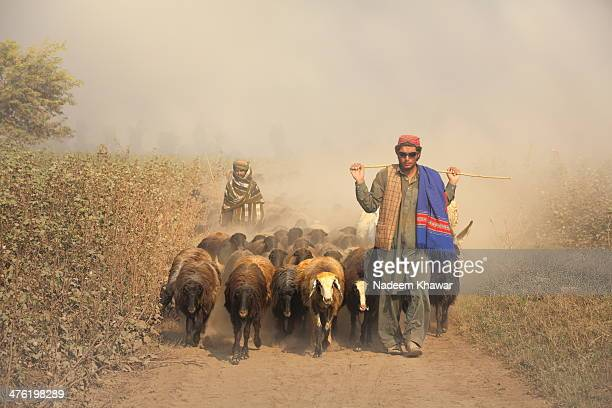 CONTENT] The Shepherd occupation or passion from centuries and still in practice and might be little more the vagabond will feel pride to adopt it