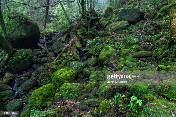 The Shiratani Unsuikyo Ravine is a lush nature park containing many of Yakushima's ancient cedars. This nature reserve offers a network of hiking...