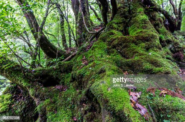 The Shiratani Unsuikyo Ravine is a lush nature park containing many of Yakushima's ancient cedars This nature reserve offers a network of hiking...