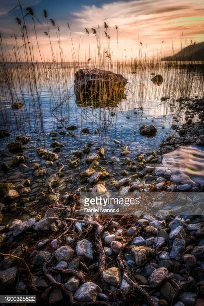 the shoreline of lake ohrid - lake ohrid stock photos and pictures