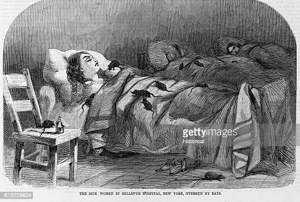 The sick women in Bellevue Hospital New York overrun by rats