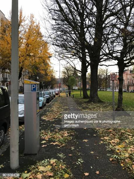 The sidewalk with parking ticket machine along trees and street in autumn