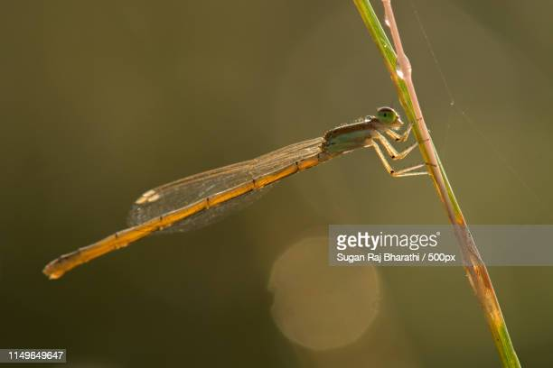 the silent killer - mayfly stock pictures, royalty-free photos & images