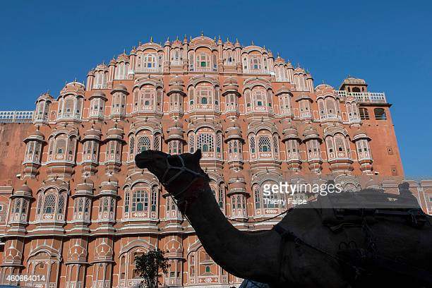 The silhouette of a camel walking by the Hawa Mahal Palace The monument was built by Maharaja Sawai Pratap Singh in 1799 in Jaipur