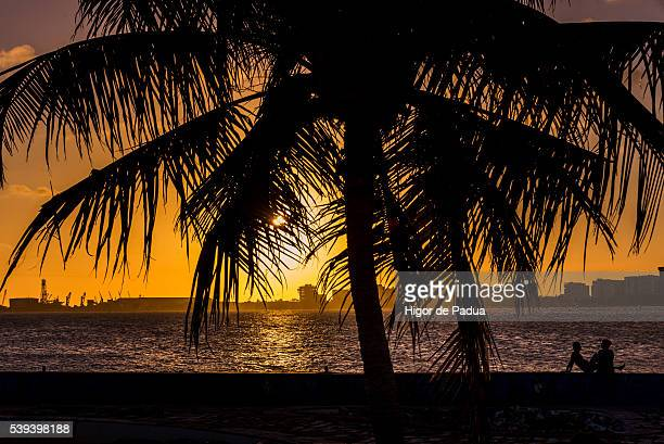 The silhouette of a couple dating at sunset behind a large palm tree and sea in the background