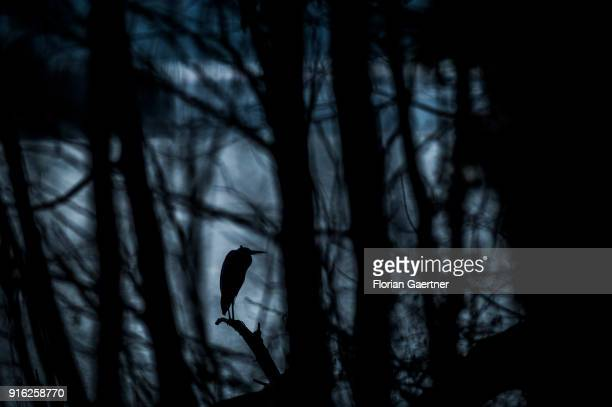 The silhouette of a heron is pictured on February 09 2018 in Berlin Germany