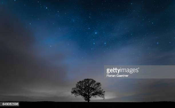 The silhouette of a tree is pictured in front of the night sky on March 03 2017 in Nieder Seifersdorf Germany