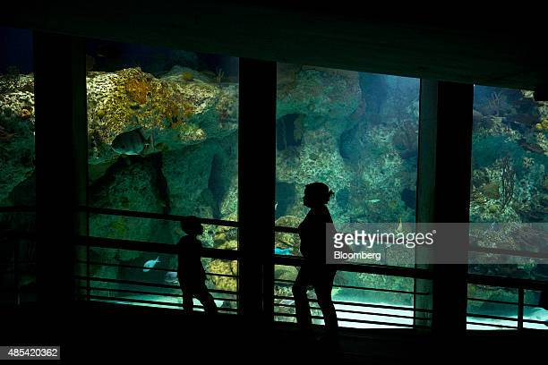 The silhouettes of visitors are seen walking through the Atlantic coral reef viewing area at the National Aquarium in Baltimore Maryland US on...