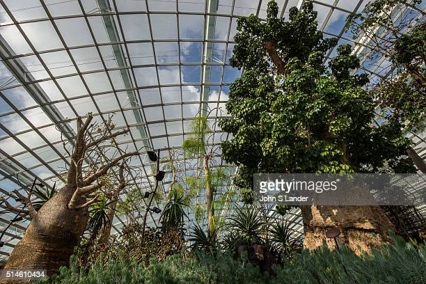 The Singapore Flower Dome is an innovative venue with the largest greenhouse in the world with rotating displays of flowers and plants Not only is...