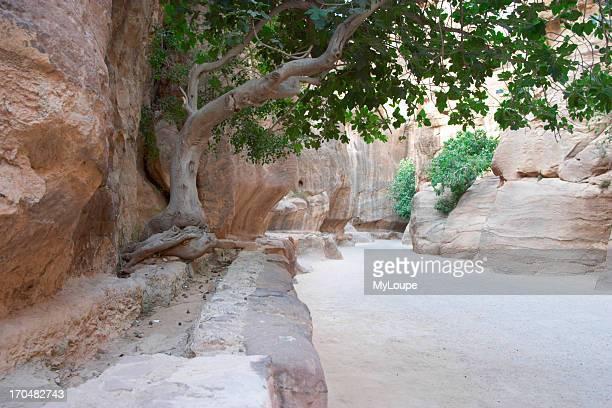 The Siq the narrow fissure leading into the lost city of Petra Jordan