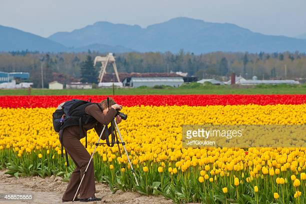 Photographing the Tulips