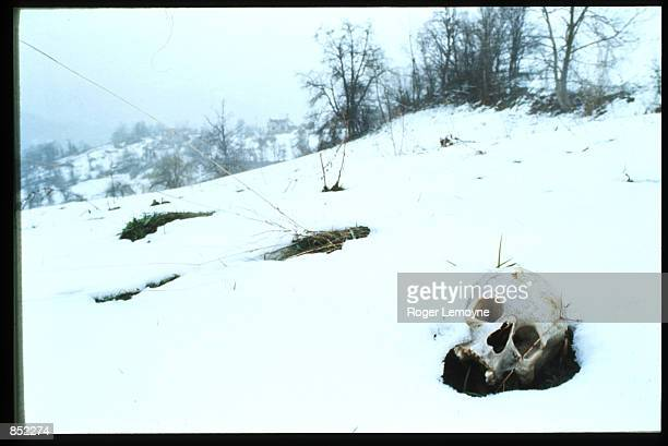 The skeletal remains of bodies massacred by Serbs is on display April 15, 1996 in Kravice, Bosnia-Herzegovina. Slobodan Milosevic instituted Serbian...