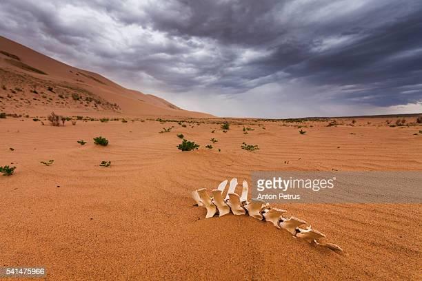 The skeleton in the desert