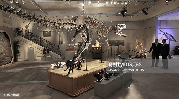 The skeleton of an Allosaurus dinosaur is displayed at Sotheby's auction house in Paris on September 29 2010 The Allosaurus the Tyranosaurus Rex of...