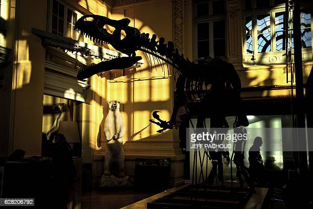 TOPSHOT The skeleton of an Allosaurus is exhibited on December 5 2016 at Lyon Brotteaux Aguttes auction house in Lyon Named 'Kan' the skeleton whose...