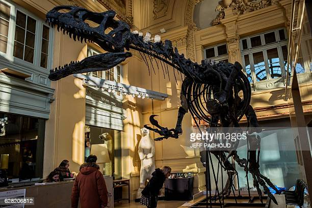 The skeleton of an Allosaurus is exhibited on December 5 2016 at Lyon Brotteaux Aguttes auction house in Lyon Named 'Kan' the skeleton whose value is...