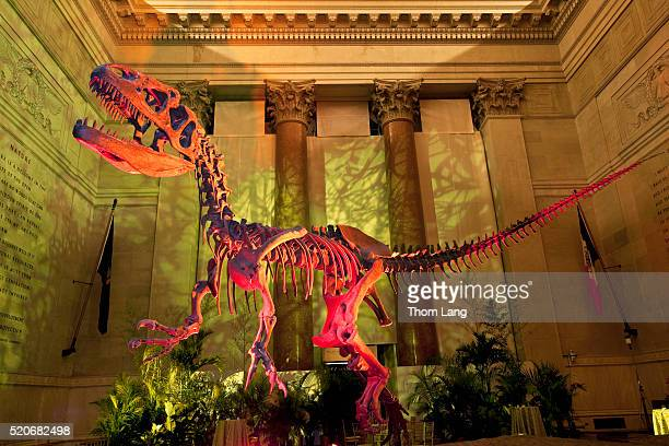 the skeleton of an allosaurus with colored lights in the entranc - sauropoda stock pictures, royalty-free photos & images