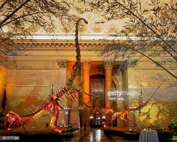 The Skeletons of the Allosaurus and Barosaurus Dinosaurs in the