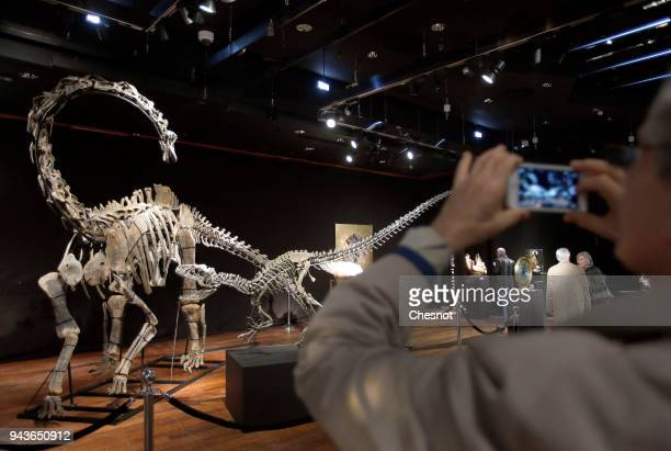 The skeletons two Jurassic age dinosaurs a Diplodocus and an Allosaurus are displayed on April 9 2018 in Paris France The estimate of these two...