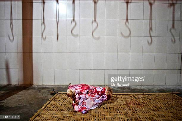 The skinned head of a cow is seen in an abattoir on June 9 2011 in Yogyakarta Indonesia Australia today announced a suspension of all live animal...