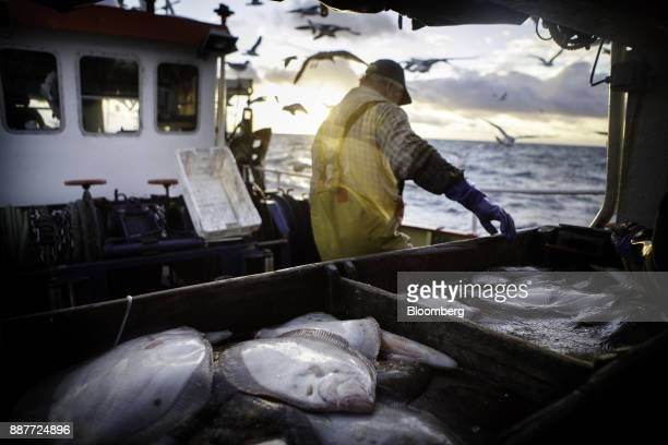 The skipper cleans his catch of brill and turbot aboard the Harvest Reaper fishing trawler approximately 18 nautical miles offshore from Newlyn,...