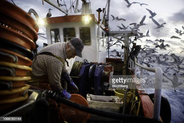 The skipper discards the innards of gutted fish aboard his fishing trawler Harvest Reaper approximately 18 nautical miles offshore from Newlyn UK on...