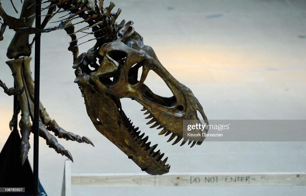 Natural History Museum of L.A. Prepares New Centerpiece For Dinosaur Hall : News Photo