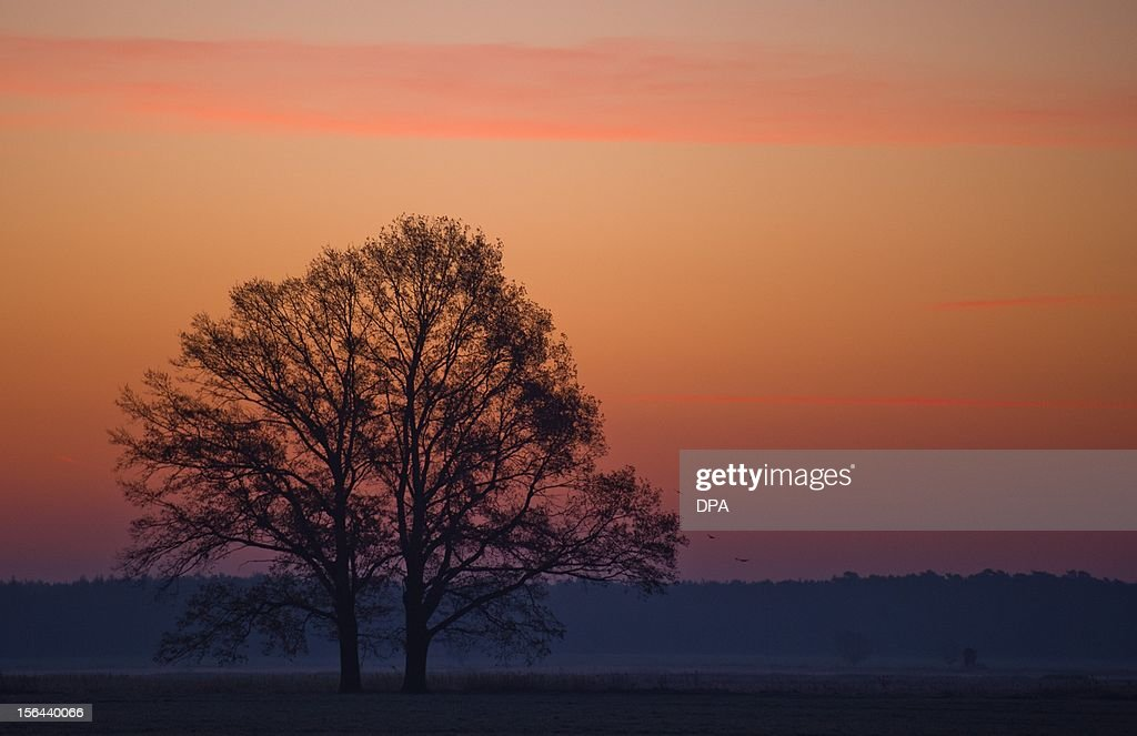 The sky is illuminated behind a tree near Jaenschwalde, eastern Germany, on November 14, 2012. Temperatures below zero caused frost in many parts of Germany.