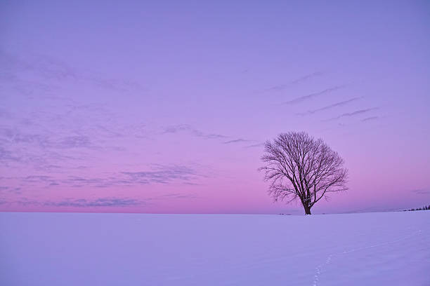 The sky of a pastel color, and a lonely tree