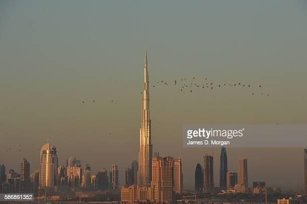 The skyline of Dubai with the world's tallest building the Burj Khalifa dominating the scene on November 13 2014 in Dubai United Arab Emirates