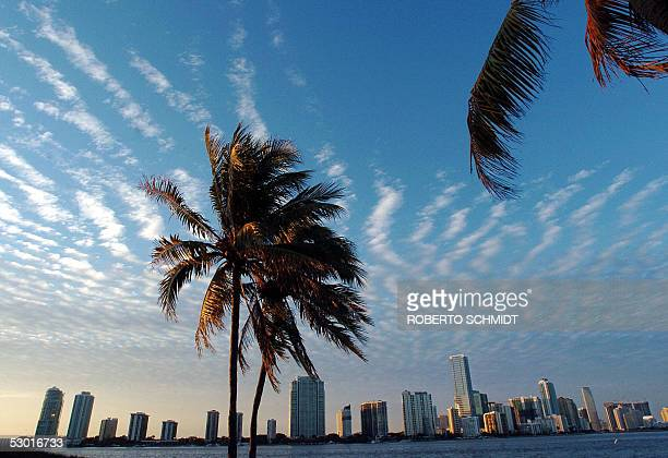 The skyline of Miami Florida is shown in this 09 March 2005 image In 1895 three stubborn visionaries came together to create Miami and in doing so...