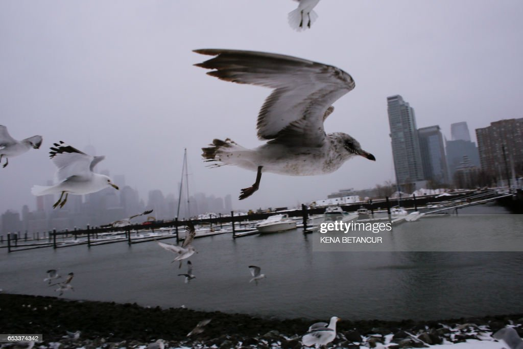 TOPSHOT - The skyline of New York appears in the distance as seagulls fly over the water's edge on March 14, 2017 in Jersey City, New Jersey. Winter Storm Stella dumped sleet and snow across the northeastern United States on Tuesday but spared New York from the worst after authorities cancelled thousands of flights and shut schools. Blizzard warnings were in effect in parts of Connecticut, Massachusetts and upstate New York, but were lifted for New York City, the US financial capital home to 8.4 million residents, where snow turned to sleet, hail and rain. BETANCUR